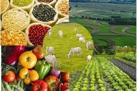 exportar peru agropecuario